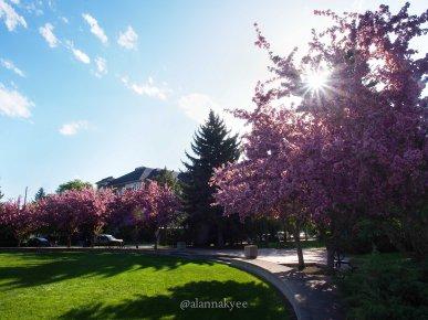 summer, henriette muir edwards park, edmonton