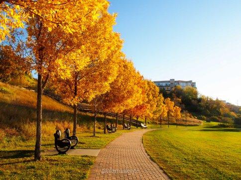 fall, edmonton, louise mckinney park