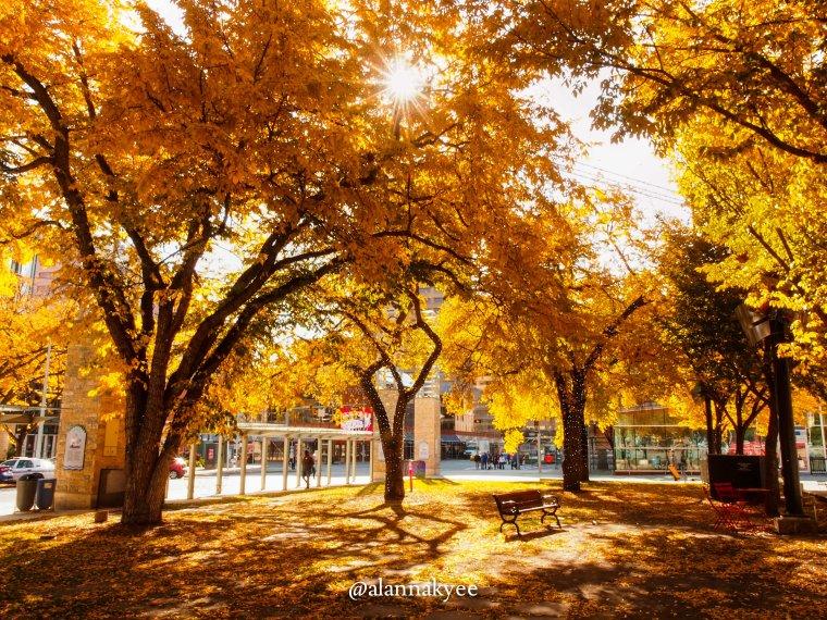 fall, edmonton, churchill square