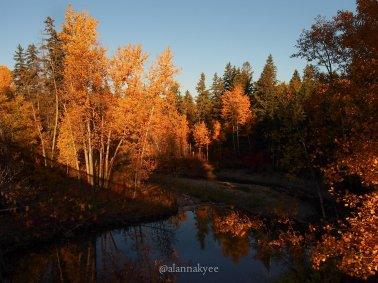 fall, edmonton, mill creek ravine