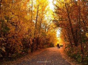 fall, edmonton, mill creek ravine