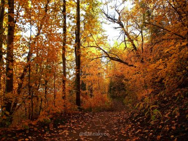 fall, edmonton