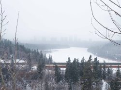 edmonton, winter, nature, november
