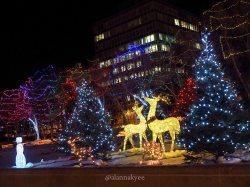 edmonton, alberta legislature, christmas