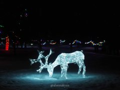 edmonton, holiday lights, christmas, leduc country lights, winter, december