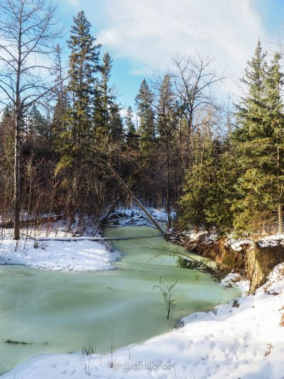 yeg, january, edmonton, mill creek ravine, winter