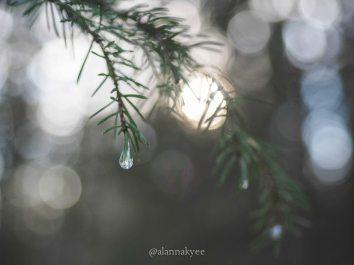 yeg, january, edmonton, mill creek ravine, winter