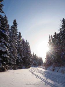 yeg, january, edmonton, winter, whitemud ravine park