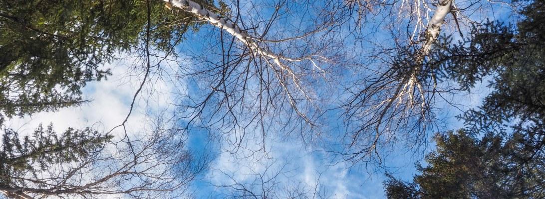 edmonton, yeg, whitemud ravine, nature, sky