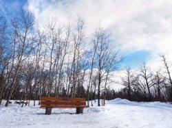 edmonton, yeg, february, whitemud ravine