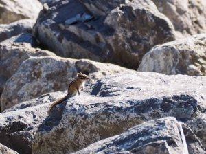 yeg, edmonton, lookbook, april, spring, river valley, squirrel