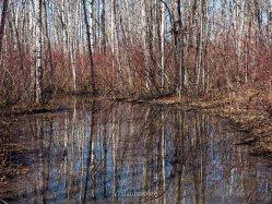 yeg, edmonton, lookbook, april, spring, river valley, terwillegar park