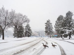 yeg, lookbook, winter, spring, canada geese, hawrelark park