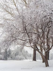 yeg, lookbook, winter, spring, snowing, hawrelark park