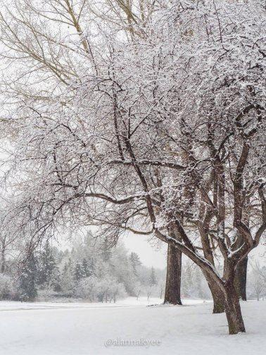 yeg, lookbook, winter, spring, snowing, hawrelark park