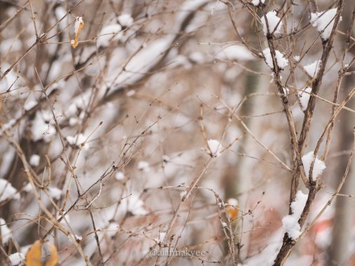 yeg, lookbook, march, snow, storm, nature, winter