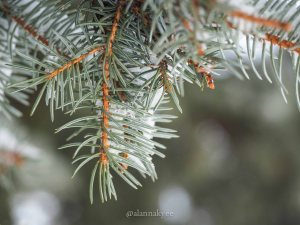yeg, lookbook, march, snow, storm, nature, winter, bokeh