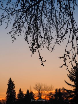 yeg, lookbook, march, sunset, silhouette, winter, storm