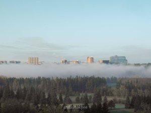 yeg, lookbook, may, spring, river valley, fog