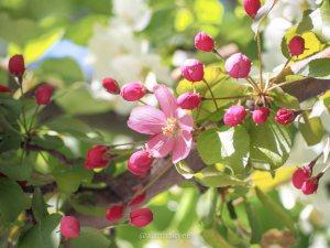 yeg, lookbook, may, spring, blossoms